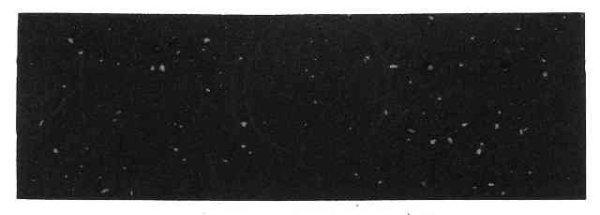 Traka volana Velo crna410271 M.